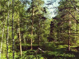 Использование леса для строительства